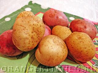 Жареные картофельные очистки: Фото 1